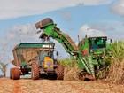 Código Florestal vai suprimir até 250 mil hectares de cana em SP, diz IEA