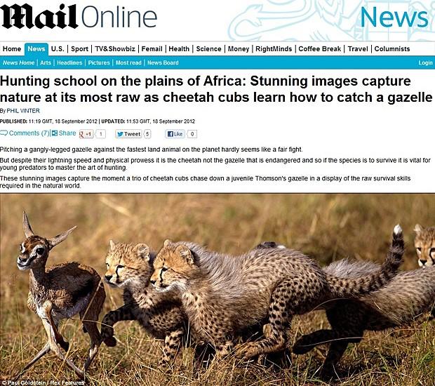 Guepardos (Foto: Daily Mail/Reprodução)