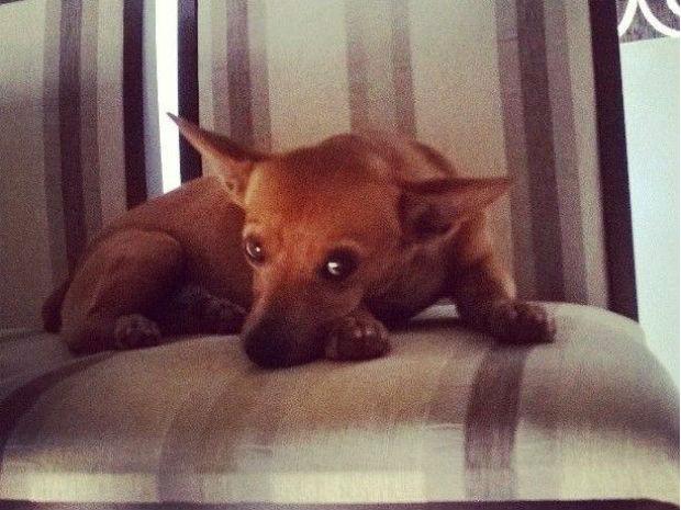Francine afirma que é preciso estar sempre perto dos cães durante os eventos (Foto: Arquivo pessoal)