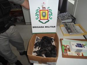 Cachorra e filhotes foram encaminados para uma instituição de cuidados com animais (Foto: Divulgação/ Brigada Militar)