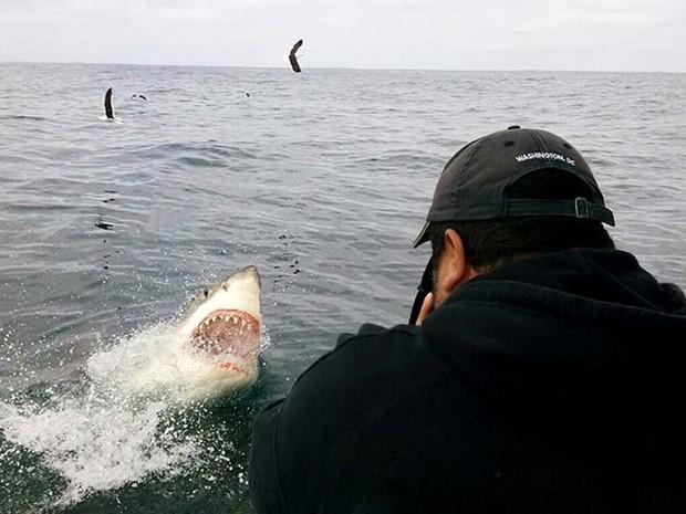 Tubarão-branco é flagrado em ação predatória na África do Sul pelo fotógrafo brasileiro Daniel Botelho (Foto: Ane Calixto)