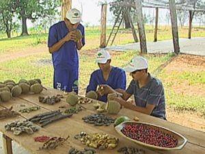Empresa oferece capacitação para os reeducandos (Foto: reprodução/TV Tem)