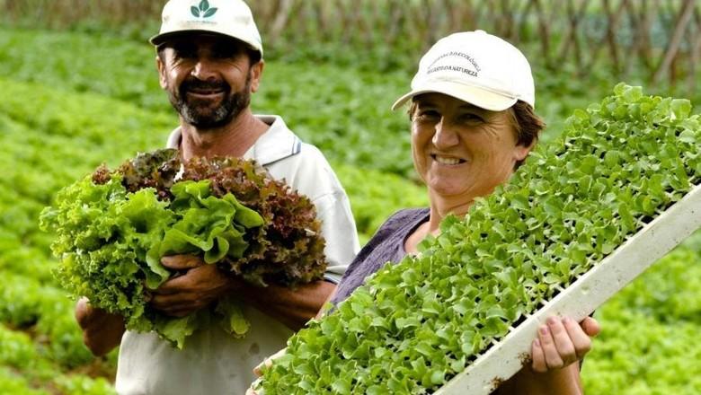 Resultado de imagem para mais agricultura