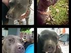 Cão que desapareceu em enchente no Texas é encontrado na Califórnia