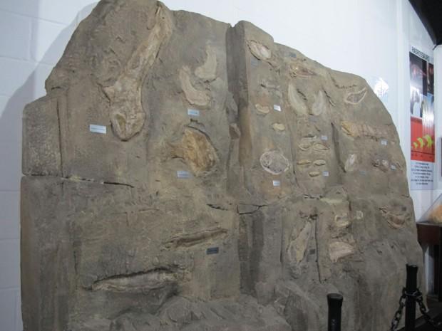 'Aquário' fóssil de peixes no Museu Jóias da Natureza (Foto: Mariane Rossi/G1)