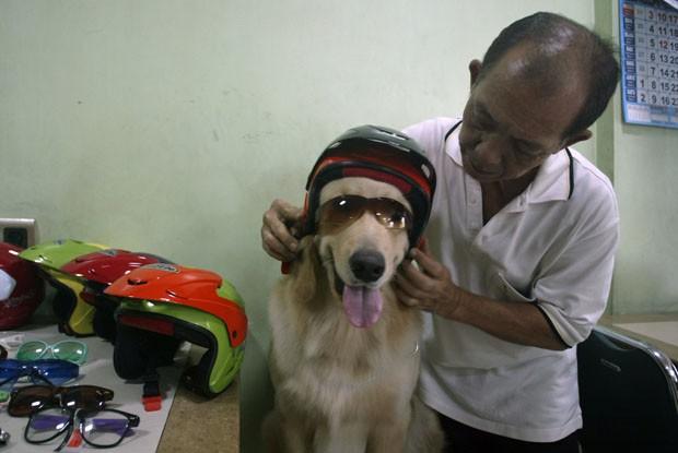 Handoko coloca capacete e óculos em Ace (Foto: Juni Kriswanto/AFP)