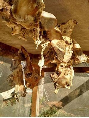 Carne deixada para secar em condições precárias, pois a estrutura do secador estava quebrada (Foto: Assessoria/SRTE-MT)