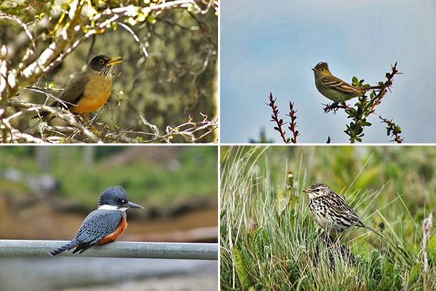 Ushuaia_aves 3 (Foto: Juan Bautista Cabral )