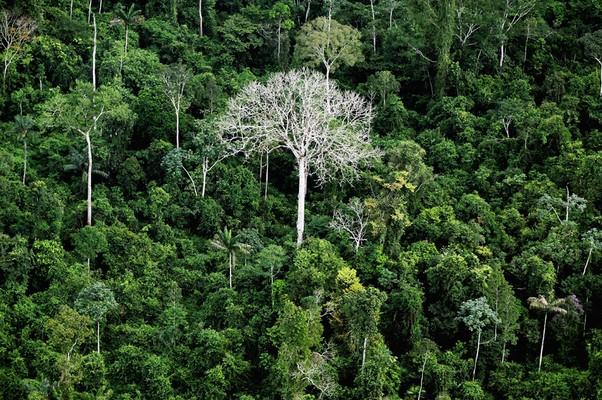 Área de floresta próxima ao rio Xingu, no Pará, onde está sendo construída a hidrelétrica de Belo Monte (Foto: Mario Tama/Getty Images)
