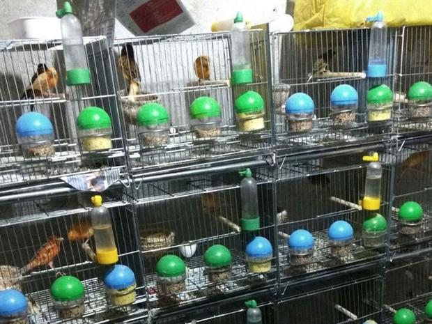 Aves foram apreendidas durante ação contra tráfico de animais silvestres  (Foto: Divulgação: Polícia Federal)