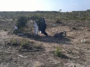 Uma cobertura com folhas e madeira foi feita para proteger o jumento do sol forte (Foto: André Veras)