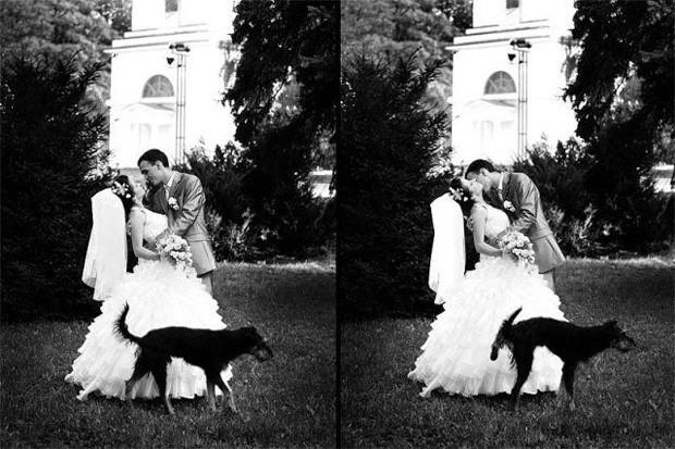 """Momento romântico foi interrompido por cachorro """"apertado"""".  (Foto: Reprodução)"""