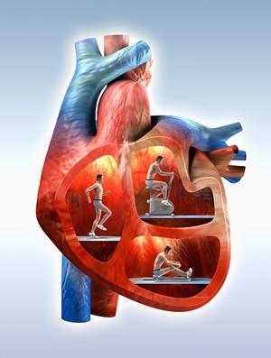 coração de atleta (Foto: Getty Images)