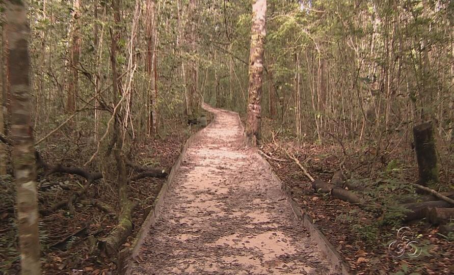 Para chegar a algumas cachoeiras, é preciso passar por trilhas (Foto: Amazônia TV)