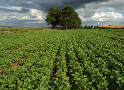 agricultura_soja (Foto: Ernesto de Souza/Ed. Globo)