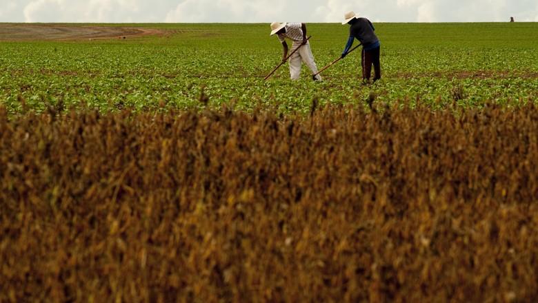 algodão_plantação_agricultor (Foto: Ernesto de Souza/ Editora Globo)
