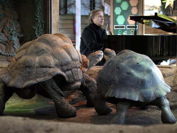 Pianista Richard Clayderman toca para incentivar o acasalamento de tartarugas no zoológico de Londres nesta quinta-feira (7) (Foto:  Lewis Whyld/AP)