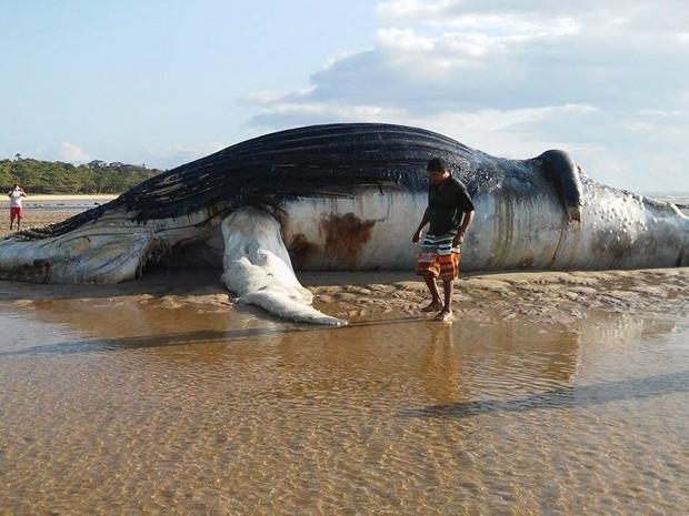 Baleia de 15 metros é encontrada morta em praia da cidade de Prado (Foto: Rosiane Jesus/Site Prado Notícia)