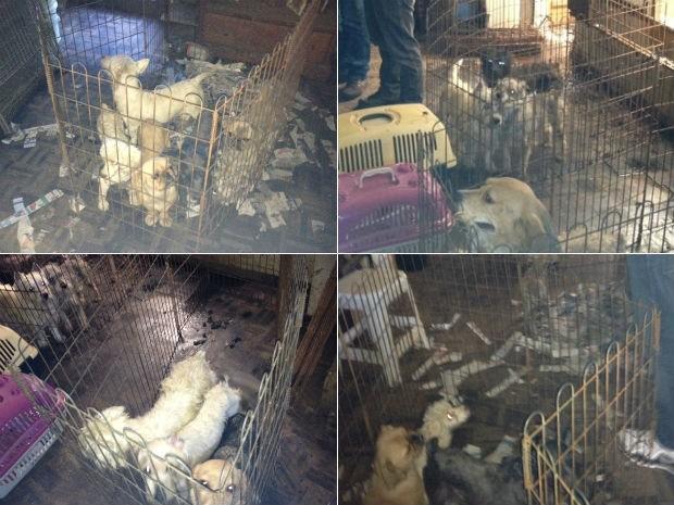 Cães eram mantidos em péssimas condições (Foto: Dulcinéia Novaes/RPCTV)