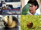 Retrospectiva 2015: Reveja casos de animais que foram notícias no ano