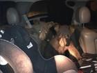 Filhotes de urso são flagrados invadindo carro nos EUA