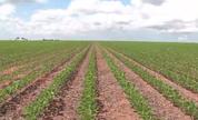 Bahia se consolida como oitavo estado produtor de grãos no Brasil  (TV Bahia)