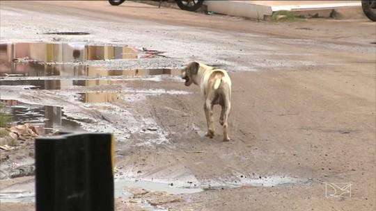ONG ajuda animais abandonados em Santa Inês