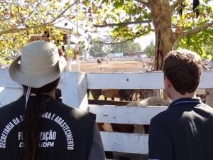 Agricultura suspende guia para trânsito de cavalos (Foto: Divulgação/Secretaria da Agricultura)