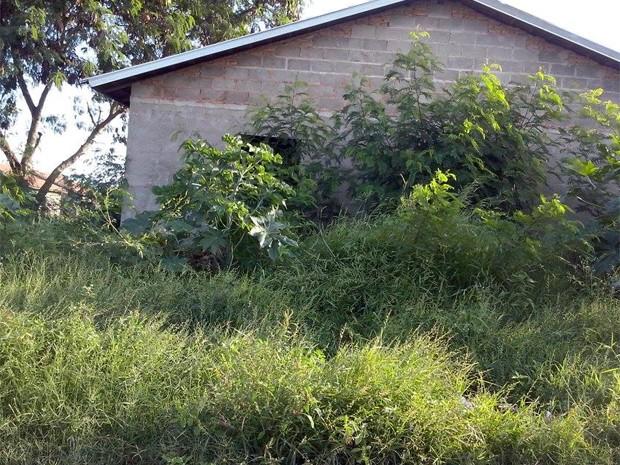 Mato alto toma conta de parede de casa popular inacabada em Barrinha, SP (Foto: Aline Bolina/Arquivo Pessoal)