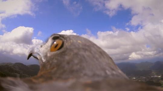 Supercâmera registra imagens exclusivas do mundo pelo olhar de ave durante voo; veja vídeos