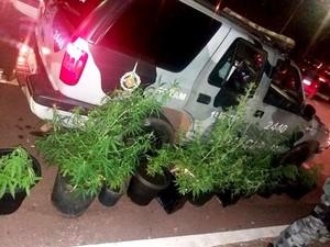 Vasos de maconha encontrados em casa no Jardim Botânico, no DF (Foto: Polícia Militar/Divulgação)