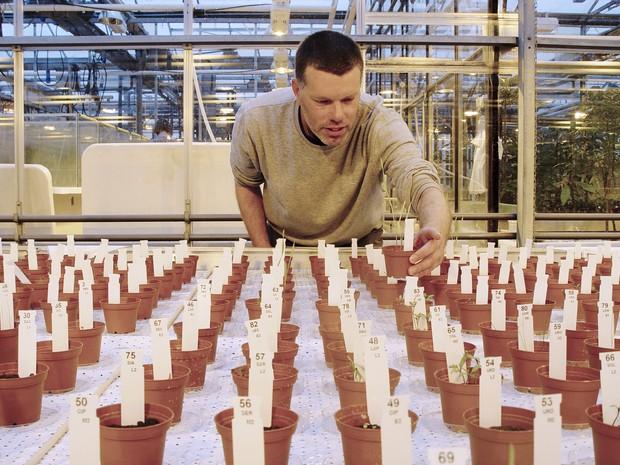 Wieger Wamelink inspeciona plantação em solo parecido com o de Marte (Foto: Joep Frissel / University of Wageningen / AFP)
