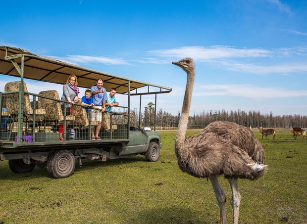 Safari Wilderness Ranch (Foto: Divulgação)