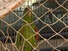 Dezenas de animais silvestres são apreendidos na Grande BH