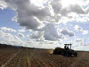 Venda futura de soja chega a recorde de 61% da safra a ser colhida em MT (Foto: Leandro J. Nascimento/G1)
