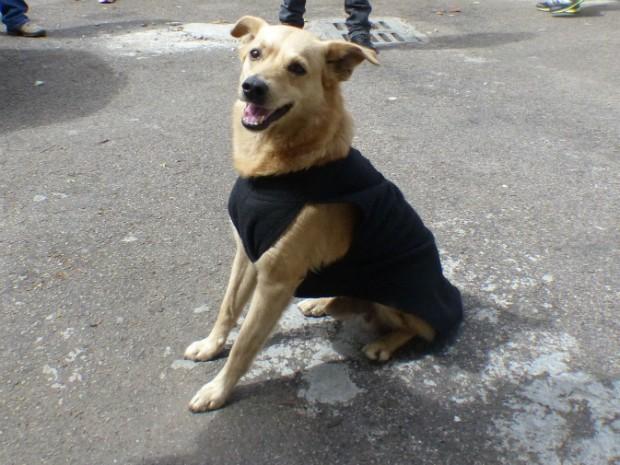 Stive foi adotado e ganhou uma roupa com o distintivo da Polícia Civil (Foto: Thais Skodowski/ G1)