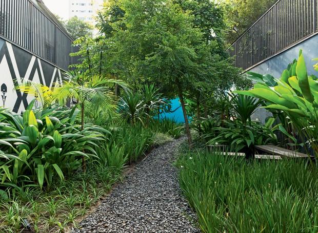 Plantasideias plantas t Plantas Caf e Jardinagem