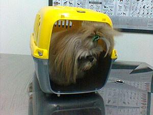 Cachorro Chiquito dentro de caixa para transporte na Bahia (Foto: Lílian Marques/ G1)