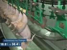 China coloca em vigor sobretaxa provisória sobre frango brasileiro