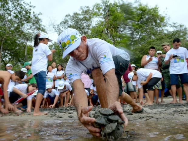 Em quinze anos de projeto, cerca de 120 mil filhotes das espécies tartaruga-da–Amazônia (Podocnemis expansa), tracajá (P.unifilis), iaçá (P. sextuberculata) e irapuca ou capirã (P. erythocephala) foram soltos (Foto: Alex Pazuello/Agecom)