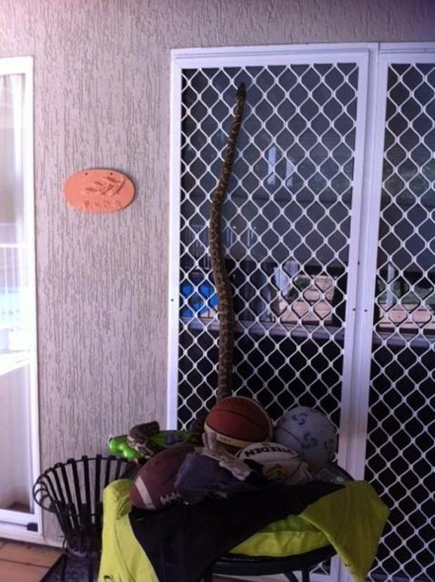 Família flagrou píton escalando a porta de vidro de sua casa em Jindalee (Foto: Reprodução/Facebook/Snake Catchers Brisbane, Ipswich, Gold Coast & Toowoomba)
