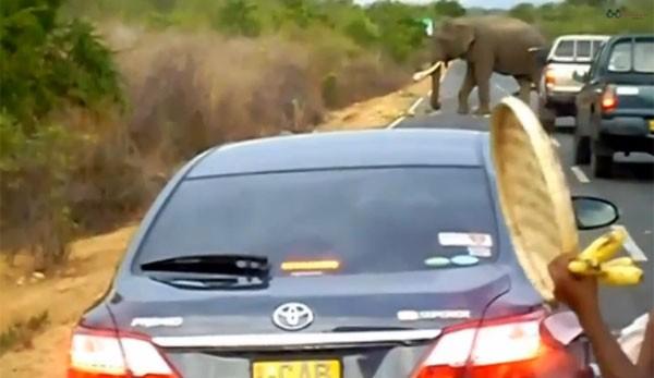 Elefante foi filmado bloqueando rodovia no Sri Lanka (Foto: Reprodução/YouTube/Bend Eye TV)