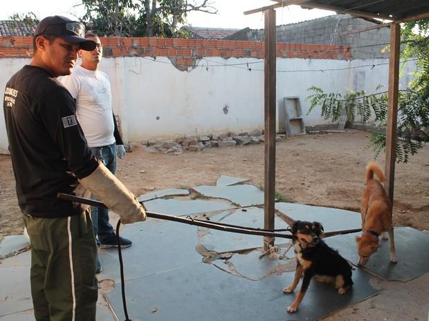 Animais tiveram que ser recolhidos para o Centro de Zoonoses (Foto: Taisa Alencar/G1)