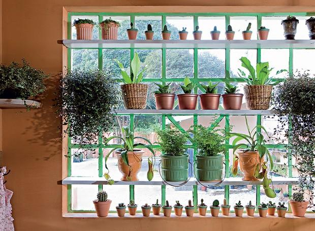 A janela ganhou vista verdejante com mais de 40 vasos em prateleiras. As plantas são de baixa manutenção. Anote os nomes: véu-de-noiva, asplênio, espadinhas, avenca e minicactos. Projeto da paisagista Gabriela Pileggi Monteiro, da Jardineiro Fiel (Foto: Edu Castello/Casa e Jardim)