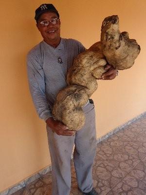 Sebastião plantou a batata há cerca de um ano (Foto: Gilzeane Haddad/Divulgação)