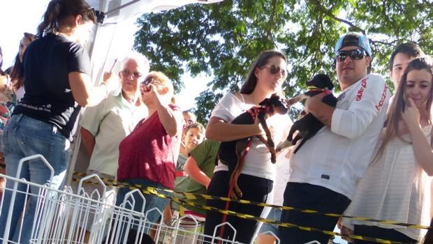 A galera também pôde se divertir com uma feira de adoção de animais bem fofinhos (Foto: Divulgação/RPC)