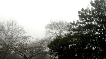 Chuva continua em todo o estado (Foto: Géssica Valentini/G1)