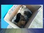Homem abandona caixa com filhotes de gatos em frente à ONG; vídeo