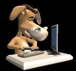 Burro no PC (Foto: Arquivo Google)