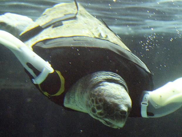 Yu perdeu as pernas dianteiras após um ataque de tubarão, e agora voltou a nadar (Foto: Toshifumi Kitamura/ AFP)